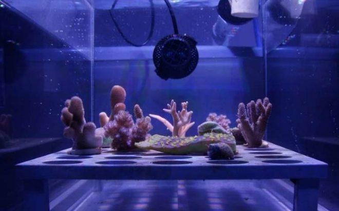 Tấm chắn nắng siêu mỏng bảo vệ các rạn san hô khỏi ánh nắng Mặt trời