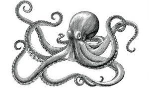 Những lần chạm trán kỳ lạ với bạch tuộc đi bộ và quái vật 8 chân