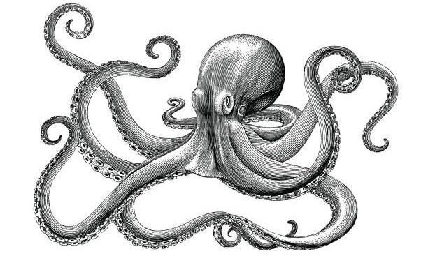 Hình vẽ bạch tuộc theo phong cách cổ điển. (Ảnh qua GetDrawings.com)
