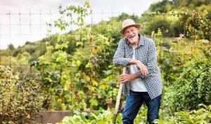 Nghiên cứu cho thấy: Sở thích làm vườn giúp nhiều người sống thọ 100 tuổi