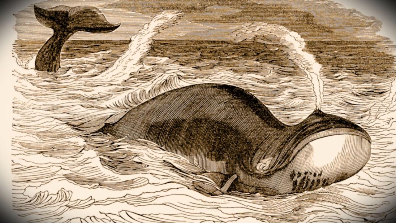 Hình vẽ minh họa cá heo ở hồ Salt Lake, bang Utah. (Ảnh qua YouTube)