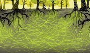 """""""Mạng Internet"""" bí mật của thực vật: Wood wide web"""
