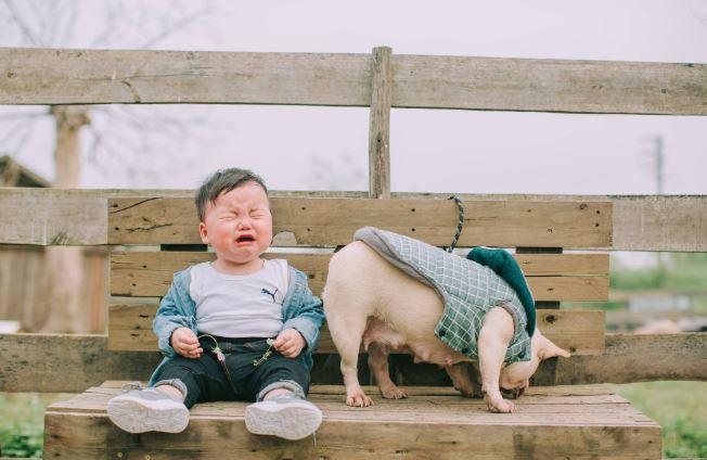 Cậu nhóc khóc ré 'ăn vạ' khi phải chụp ảnh bên cạnh chó - H5