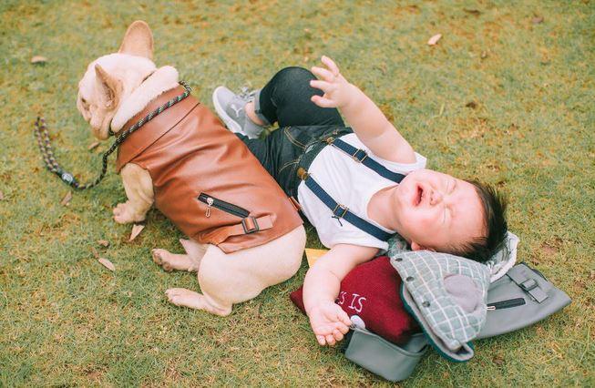 Cậu nhóc khóc ré 'ăn vạ' khi phải chụp ảnh bên cạnh chó - H15