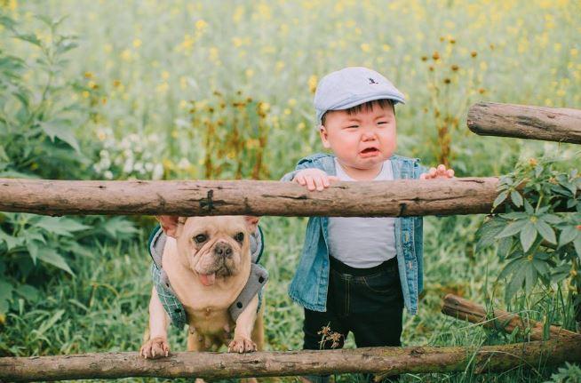 Cậu nhóc khóc ré 'ăn vạ' khi phải chụp ảnh bên cạnh chó - H12