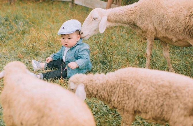 Cậu nhóc khóc ré 'ăn vạ' khi phải chụp ảnh bên cạnh chó - H13