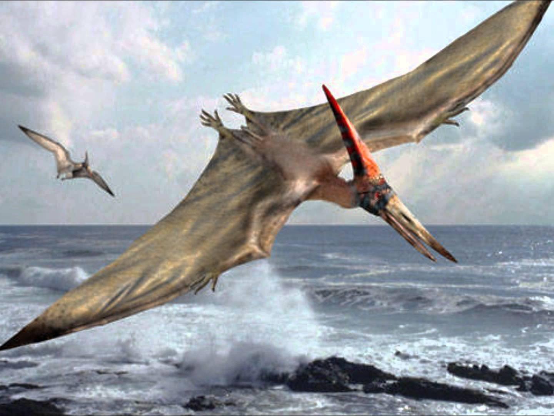 Hình minh họa thằn lằn bay thời tiền sử. (Ảnh: Reddit)