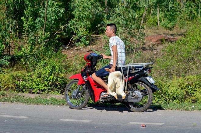 Quảng Bình: Xe tải chở đàn vịt 1.800 con gặp nạn, dân đua nhau hôi của - H3
