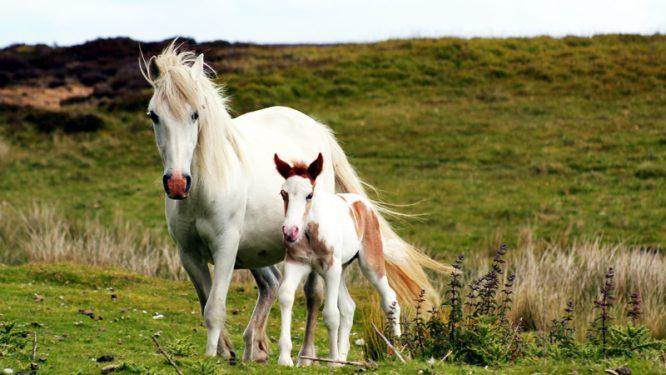 Chó và ngựa nói tiếng người - Hai câu chuyện ly kỳ về đầu thai chuyển kiếp - H2
