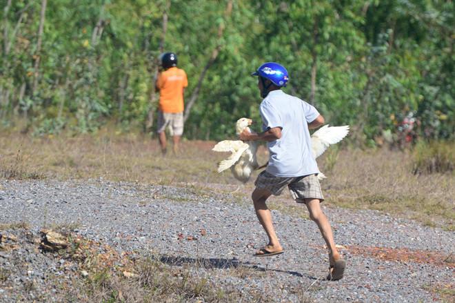 Quảng Bình: Xe tải chở đàn vịt 1.800 con gặp nạn, dân đua nhau hôi của - H2