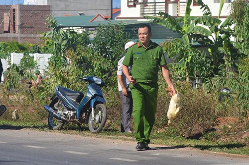 Quảng Bình: Xe tải chở đàn vịt 1.800 con gặp nạn, dân đua nhau hôi của - H4