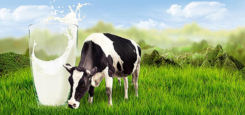 Vì sao chúng ta nên dừng uống sữa bò? - ảnh 1