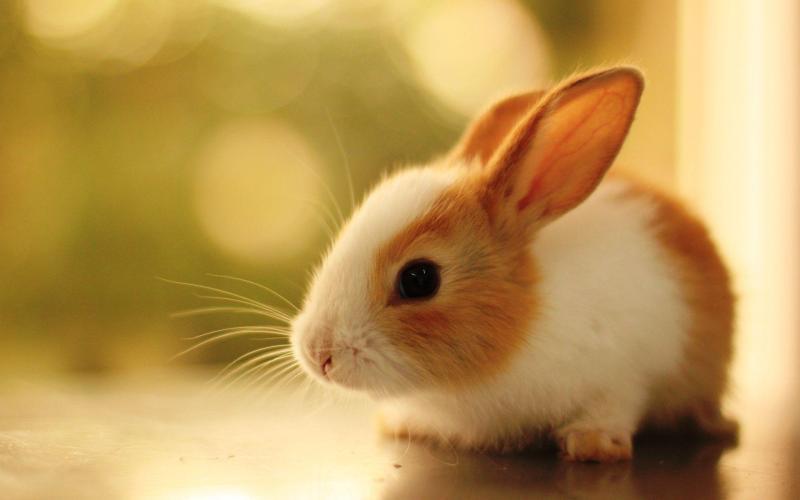 Thí nghiệm tỏi trên thỏ cho thấy lượng đường huyết suy giảm. (Ảnh qua goodpict1st.org)