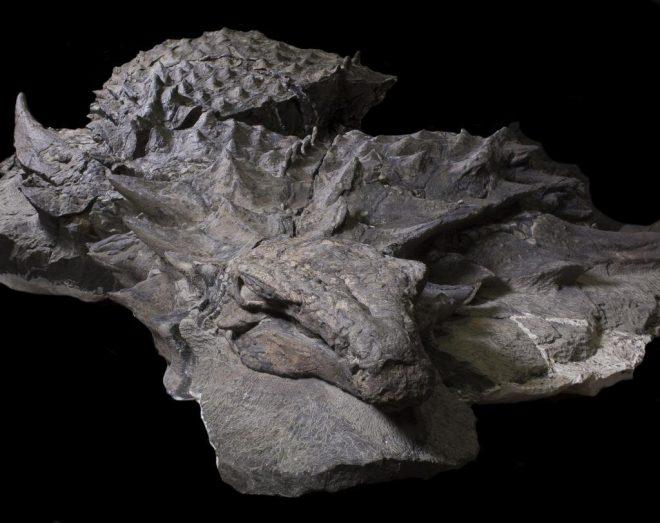 """Khủng long """"bằng xương bằng thịt"""" 100 triệu năm trước xuất hiện tại Canada - H1"""