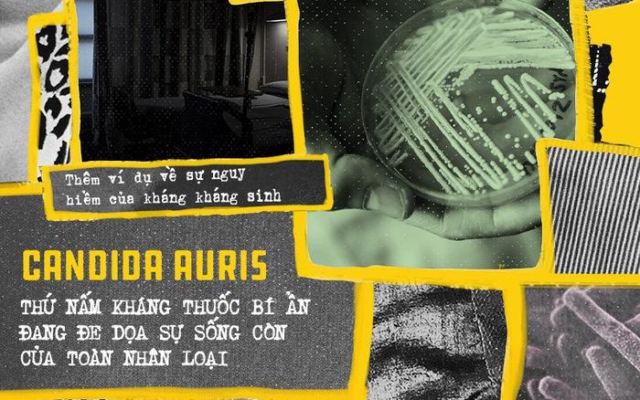 Candida Auris, thứ nấm kháng thuốc bí ẩn đang đe dọa sự sống còn của toàn nhân loại