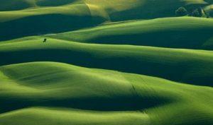 Những cánh đồng đẹp 'mê hồn' dưới góc chụp từ máy bay