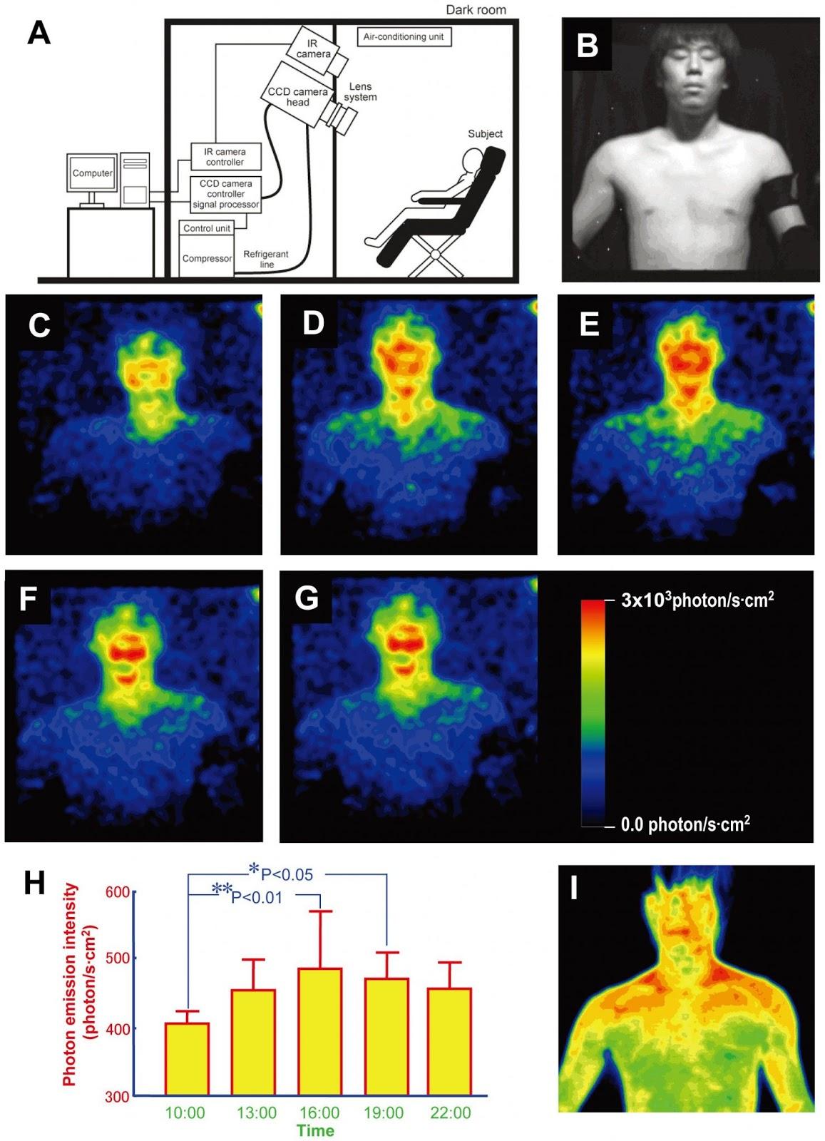 Sơ đồ minh họa thí nghiệm cho thấy: Cơ thể con người, đặc biệt là khuôn mặt, phát ra ánh sáng khả kiến với số lượng nhỏ thay đổi trong ngày. B là một tình nguyện viên được thử nghiệm. Các hình ảnh khác cho thấy sự phát xạ yếu của ánh sáng khả kiến trong điều kiện hoàn toàn tối. Biểu đồ tương ứng với các hình ảnh và cho thấy mức phát quang thay đổi trong ngày. Hình ảnh cuối cùng (I) là hình ảnh hồng ngoại của tình nguyện viên thể hiện sự phát xạ nhiệt. (Ảnh: Học viện công nghệ Tohoku - Đại học Kyoto)