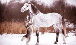 Chó và ngựa nói tiếng người – Hai câu chuyện ly kỳ về đầu thai chuyển kiếp