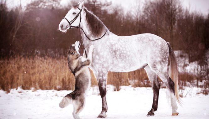 Chó và ngựa nói tiếng người - Hai câu chuyện ly kỳ về đầu thai chuyển kiếp - H1