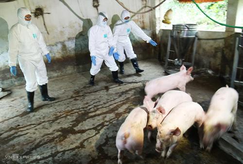 Lực lượng chức năng ở Hà Nội diễn tập ứng phó với dịch tả lợn châu Phi.