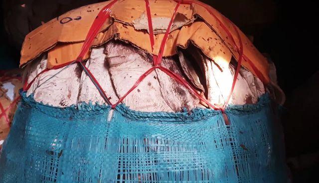 Quảng Ngãi: Hàng ngàn tấn mực ứ đọng do TQ ngừng thu mua.5