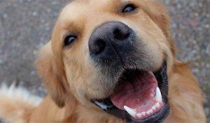 Trung Quốc: Công nghệ nhận diện thú cưng dựa trên… vân mũi