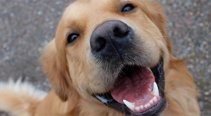 Trung Quốc phát triển AI nhận diện chó thất lạc dựa trên... vân mũi của chúng