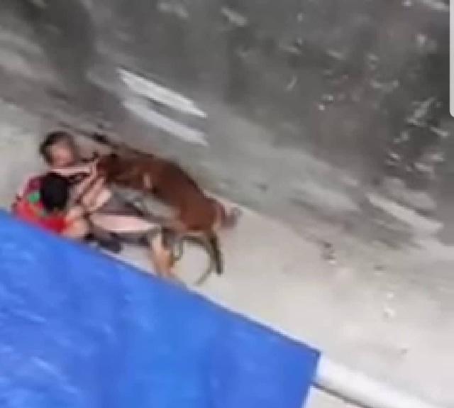 Nạn nhân bị con chó lao vào cắn, xé rách quần áo, nằm quằn quại dưới giữa đường