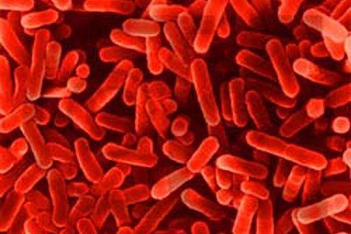 vi khuẩn Legionairre