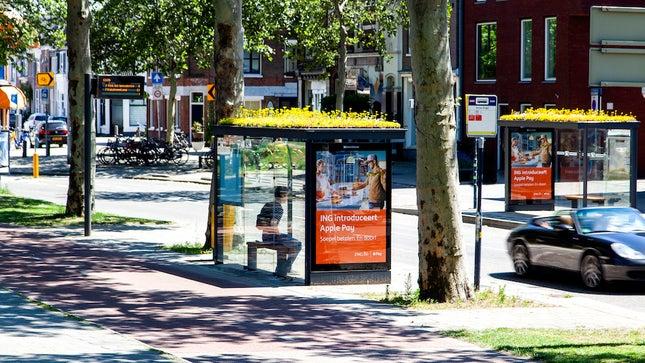 Hà Lan đã biến 316 trạm xe buýt thành điểm đến của những chú ong. (Ảnh qua TheHill)