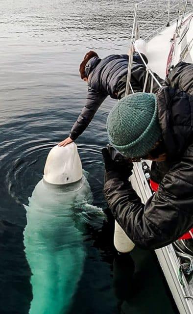 Chú cá voi tỏ ra khá thân thiện với con người.