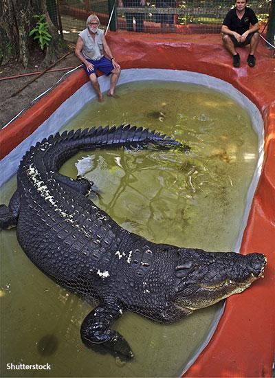 Ông George Craig bên chú cá sấu Cassius. (Ảnh: Shutterstock)