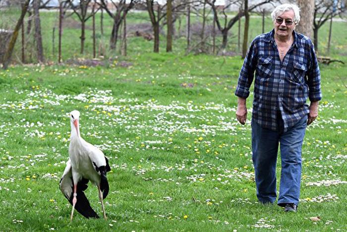 Năm 1993, nhân viên chăm sóc trường học đã về hưu tên là Stjepan Vokić đã phát hiện ra Malena ở bên cạnh hồ nước, ông đã cứu giúp và chăm sóc nó. Ảnh chụp vào ngày 9/4/2018.