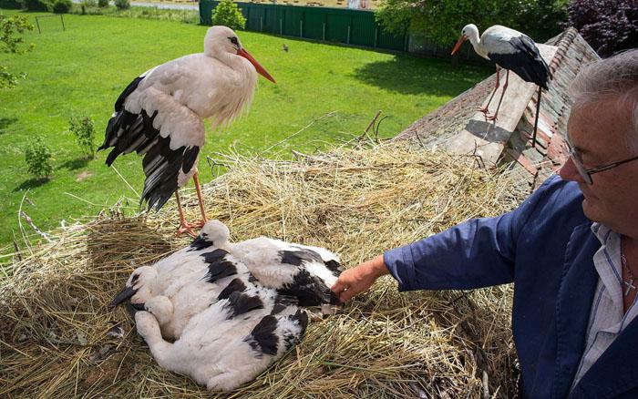 Tình yêu của Malena và Klepetan cũng đã đơm hoa kết trái, chúng đã có tổng cộng hơn 40 cò con