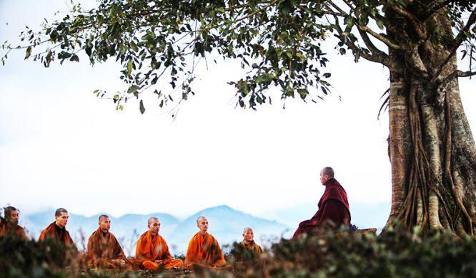 Người xưa đều tin rằng những cây cổ thụ hơn nghìn năm đều rất linh, làm không khéo có thể gây họa.1