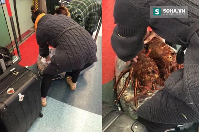 hai người phụ nữ đã tranh thủ nhồi nhét ít nhất hơn chục con tôm hùm còn sống nguyên vào vali du lịch