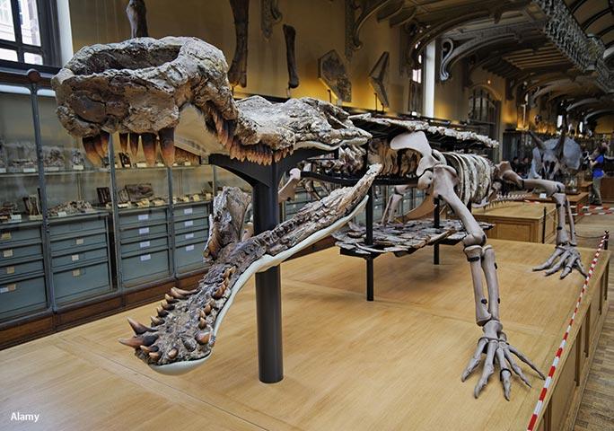 Một bộ xương của cá sấu Sarcosuchus được trưng bày tại Bảo tàng Lịch sử Tự nhiên Quốc gia ở Paris, Pháp. (Ảnh:Guinness World Records)