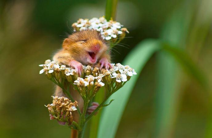 Cười cho cuộc đời thêm vui.