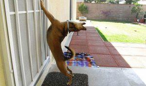Chết cười với 20+ hình ảnh thú cưng năn nỉ xin được vào nhà