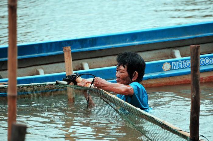 """Để an toàn cho trẻ, bà Sáu Thia tự mình lặn xuống sông cắm từng cọc tre, bao lưới mùng làm hàng rào xung quanh để biến thành """"hồ bơi"""" dã chiến."""