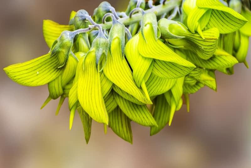 Không có bất cứ lý do nào để những bông hoa này phải ngụy trang thành loài chim. (Ảnh qua trithuc)