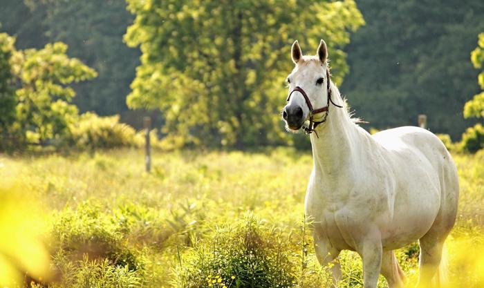 Ngựa tốt sẽ chỉ tập trung ăn cỏ, cứ thế mà ăn cho no, không cần bận tâm cỏ mọc ở xung quanh có tốt hay không.