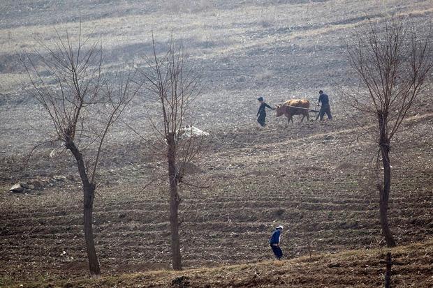 Nông dân Triều Tiên làm việc trên đồng gần Sinuiju, giáp biên giới với Trung Quốc tại thành phố Đan Đông vào tháng 4/2017. (Ảnh qua AFP)