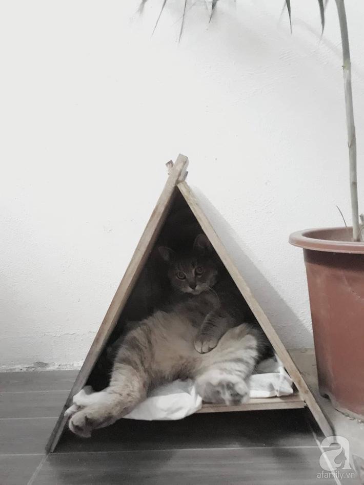 Góc trốn tìm của chú mèo cưng.