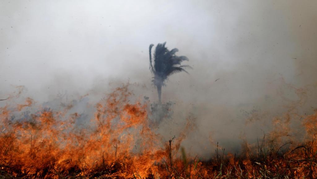 Góp sức cứu rừng Amazon chỉ bằng cách gõ phím - Ecosia (ảnh 3)