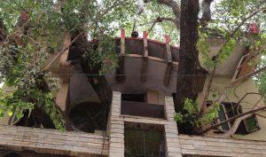 Không chặt đi mà uốn nhà theo cây bồ đề 150 năm tuổi, nhà mát hơn cả điều hoà