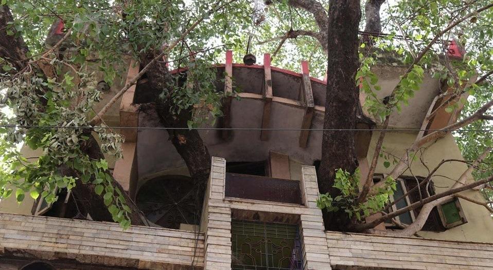 Nhờ có cây, cả căn nhà lúc nào cũng được làm mát dù không bật máy lạnh.