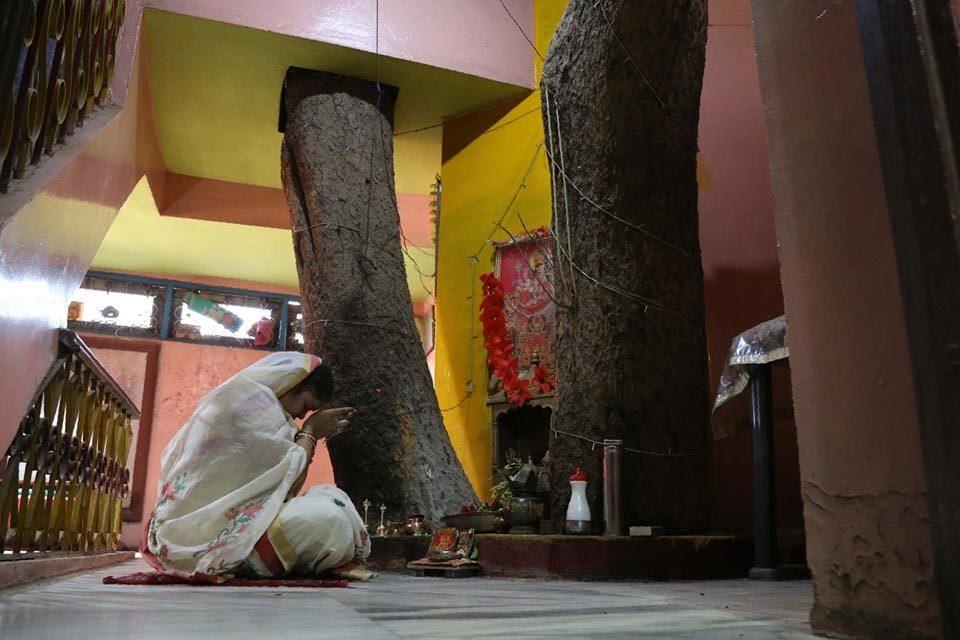 Vợ của Yogesh không phải đi chùa để cầu nguyện, cô ấy chỉ cần cầu nguyện trước cái cây mỗi sáng.