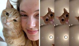 Chú mèo gây sốt mạng xã hội vì sự siêu đáng yêu của mình trên Tik Tok