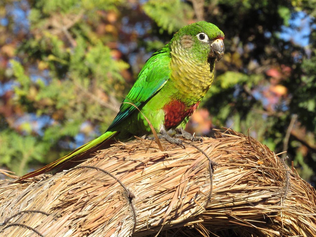 """""""Những con chim được nuôi sẽ không được bảo vệ theo Đạo luật bảo vệ động vật hoang dã""""."""